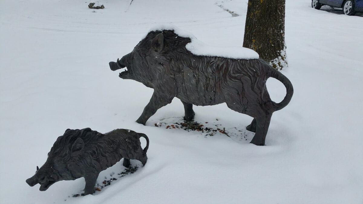 Eber im Schnee